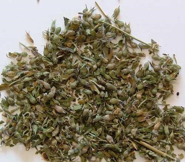 Picture of Catnip - Cut (25g) - Magical Herb