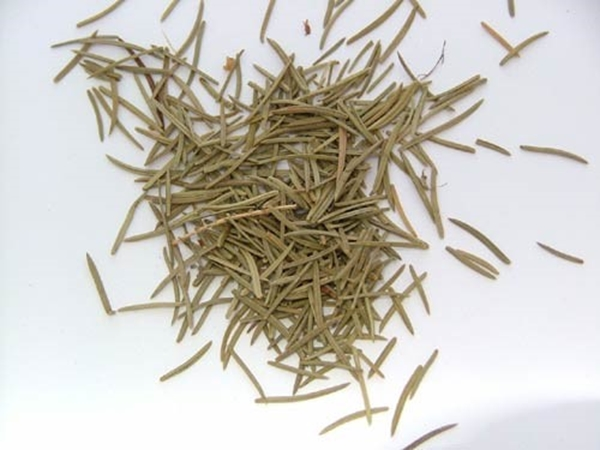 Picture of Pine Needles (25g) - Magical Herb