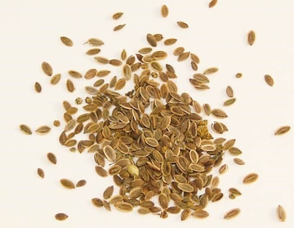 Picture of Dill Seeds (25g) - Magical Herb