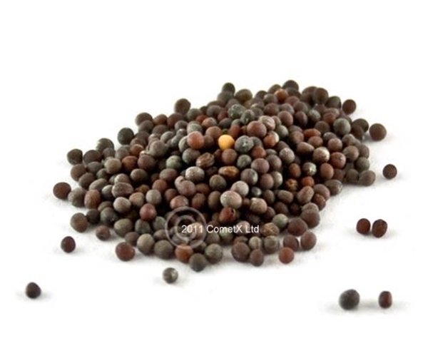 Picture of Mustard Seed (25g) - Brown