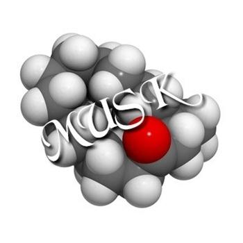 Musk Candle Fragrance Image