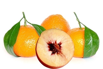 Peach nectar And Mandarin Fragrance Image